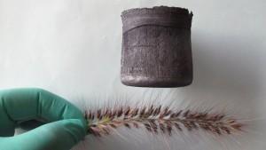 aerogel-grass-spines