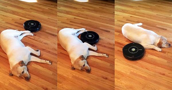 Roomba vacuuming around a dog